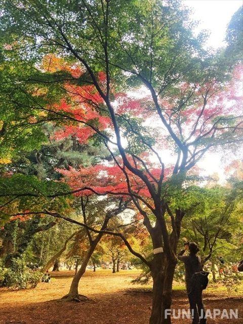 Japanese garden style for the Autumn
